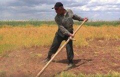 داعش تفرض زكاة أكبر على مزارعي الرقة