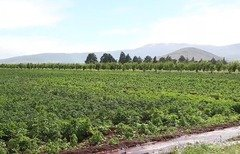 Hizbullah uses drug trade to finance activities