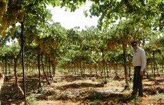 الأردن يساعد المزارعين على تعزيز الأمن الغذائي