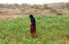 آزادسازی مناطق حجه و صعده از سوی ارتش یمن