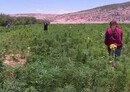 Jordanians denounce Hizbullah's drug trade