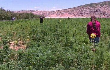 الأردنيون ينددون بتجارة حزب الله للمخدرات