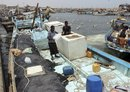 Iran steals Yemen's fish wealth as millions face food insecurity